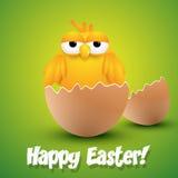 Pintainho pequeno que choca de um ovo Foto de Stock Royalty Free