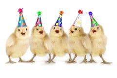 Pintainhos amarelos do bebê que cantam o feliz aniversario fotos de stock royalty free