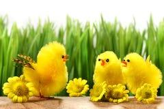 Pintainhos amarelos que escondem na grama Fotografia de Stock Royalty Free