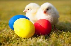 Pintainhos ao lado dos ovos da páscoa coloridos Fotografia de Stock