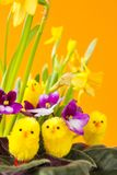 Pintainhos de Easter Fotografia de Stock Royalty Free