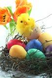 Pintainhos de Easter Fotografia de Stock