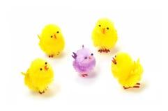 Pintainhos de Easter Imagens de Stock
