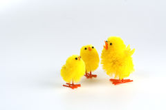 Pintainhos de Easter Foto de Stock Royalty Free