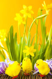 Ovos da páscoa, pintainhos e flores Imagens de Stock Royalty Free