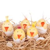 Pintainhos do ovo da páscoa Fotografia de Stock