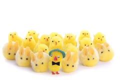 Pintainhos e bunnys de Easter sobre o branco Imagem de Stock Royalty Free