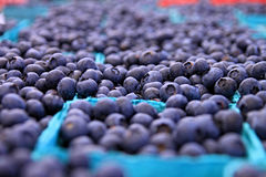 Pinte delle bacche blu Immagine Stock Libera da Diritti
