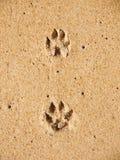 Pinte delle zampe del cane in sabbia Fotografia Stock