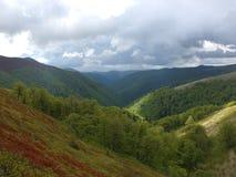Pinte el bosque del verano en las montañas Foto de archivo