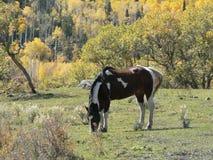 Pinte el caballo Imagen de archivo