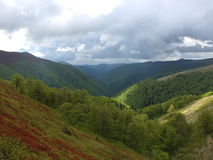Pinte a floresta do verão nas montanhas Foto de Stock