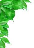 Pinte las hojas Imagen de archivo