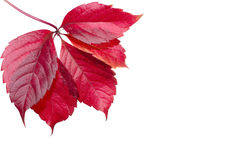 Pinte las hojas Fotografía de archivo libre de regalías
