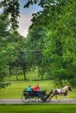 Pinte a movimentação do verão do cavalo e do carrinho perto imagem de stock