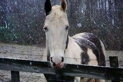 Pinte o cavalo que está na neve imagens de stock