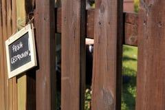 Pinte recientemente la cerca de madera del jardín Fotos de archivo libres de regalías