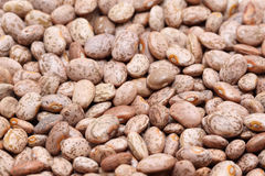 Pinto bean Stock Images