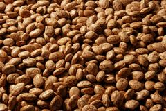 Pinto Bean Background Stock Photography