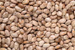 Pinto bean background Stock Image