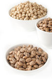 Pinto bean and garbanzo Royalty Free Stock Photo