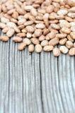 Pinto bean Royalty Free Stock Image