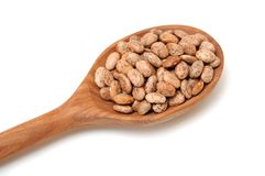 Pinto bean Royalty Free Stock Image