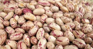 Pinto beans. The common bean, Phaseolus vulgaris, is an herbaceous annual plant domesticated independently in ancient Mesoamerica and the Andes, and now grown Royalty Free Stock Photography