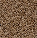 Pinto Beans Images stock
