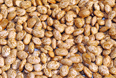 Pinto Beans. Collection of Pinto Beans, background Stock Photos