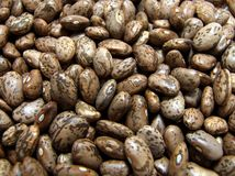 Pinto beans. A speckled pinto beans texture Stock Photography
