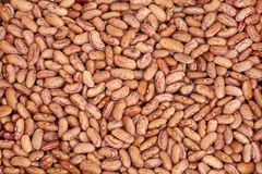 Pinto Beans Royalty Free Stock Photo