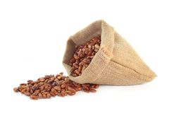 Pinto beans. Dried pinto beans in a jute sack Stock Image