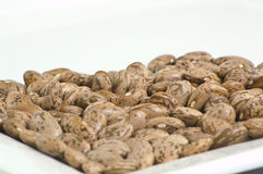 Pinto Beans. Uncooked pinto beans on a white plate Royalty Free Stock Photo