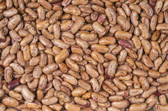 Pinto-beans Royalty Free Stock Photography