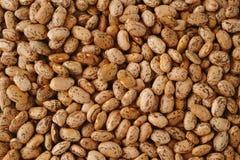 Pinto Beans Imagem de Stock