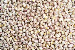 Pinto Beans Fotos de archivo libres de regalías
