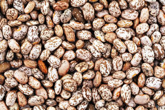 Pinto beans. Background from many pinto beans Stock Photography
