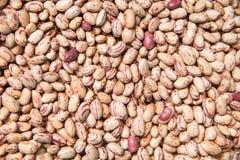 Pinto Beans royaltyfri fotografi
