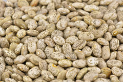 Pinto beans background Royalty Free Stock Photo