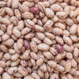Pinto beans Stock Image