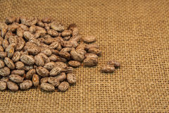 Pinto beans Stock Photography