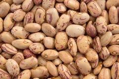 Pinto Beans Royalty Free Stock Photo