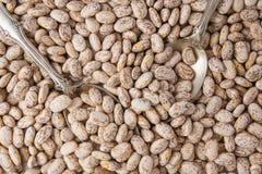 Pinto Beans Close Up Top-Ansicht, Nahrungsmittelhintergrund, getrocknete Bohnen, Hülsenfrucht-Familie lizenzfreie stockbilder