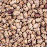 Pinto Beans stockfoto