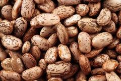 Pinto Beans Extreme Macro Imagen de archivo libre de regalías