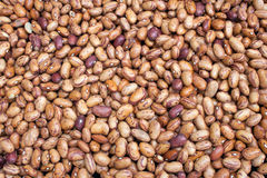 Pinto Beans 5149 Royalty Free Stock Photography