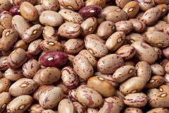 Pinto beans  full frame Royalty Free Stock Photography