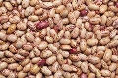 Pinto beans full frame Stock Photography