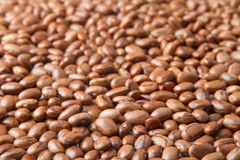 Pinto beans grains Stock Photography